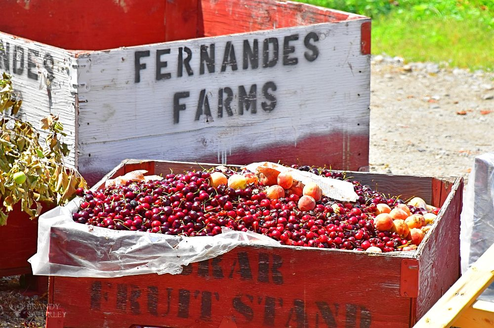 Fernandes Farms Osoyoos - BC fruit season