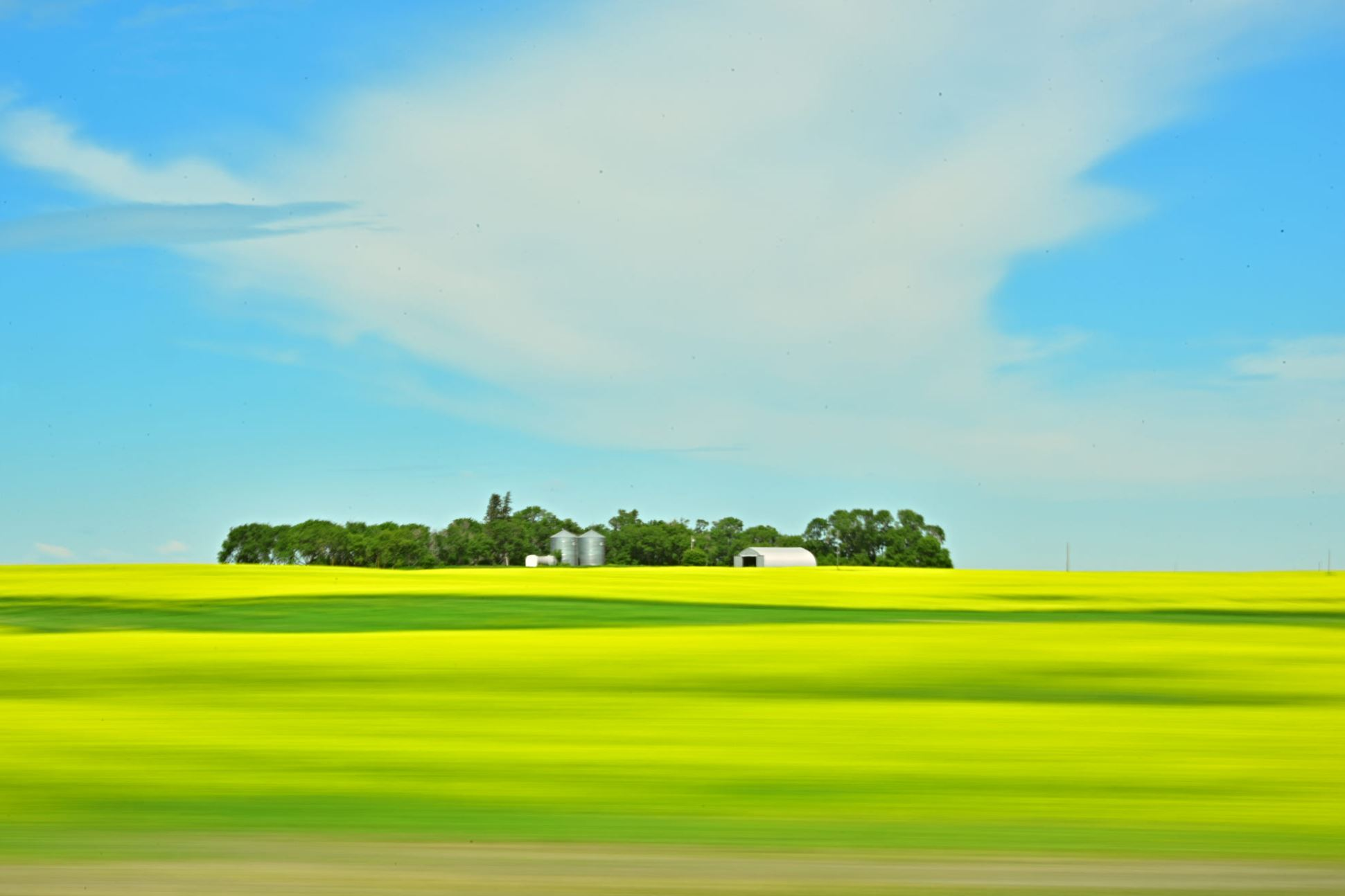 panning shot of canola fields