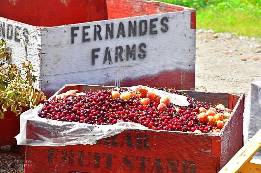 Fernandes Farms Osoyoos - BC fruit season
