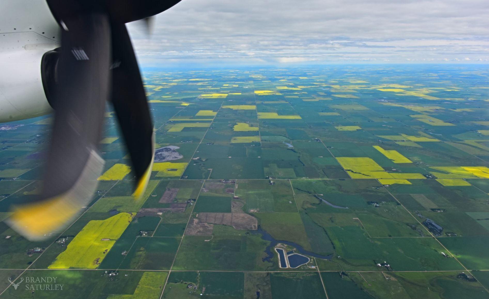westjet flight over prairie fields of canola