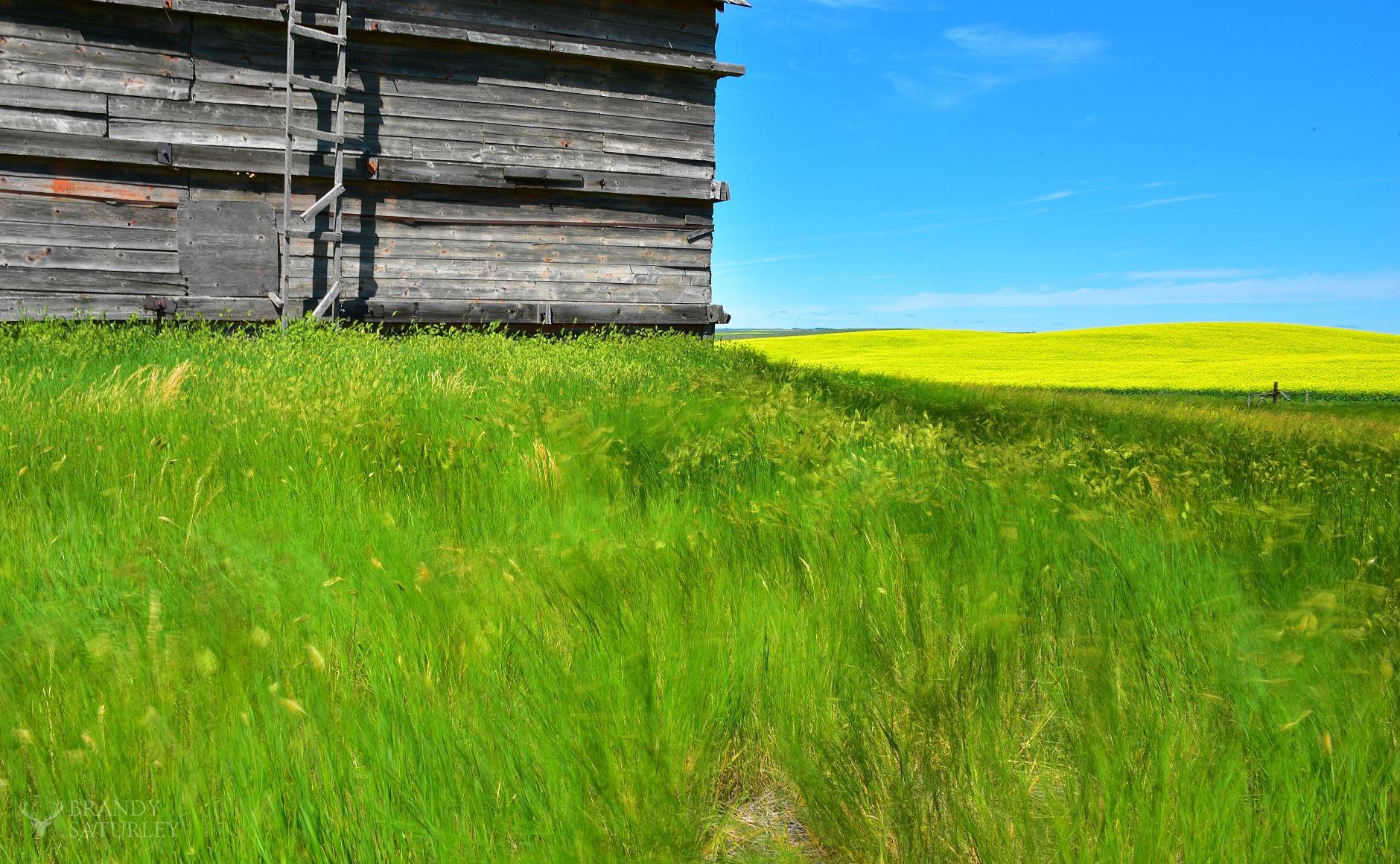 Saskatchewan barn and fields